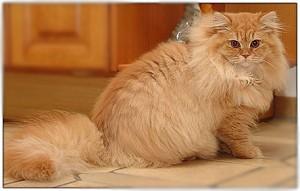 Почему кошки не толстеют