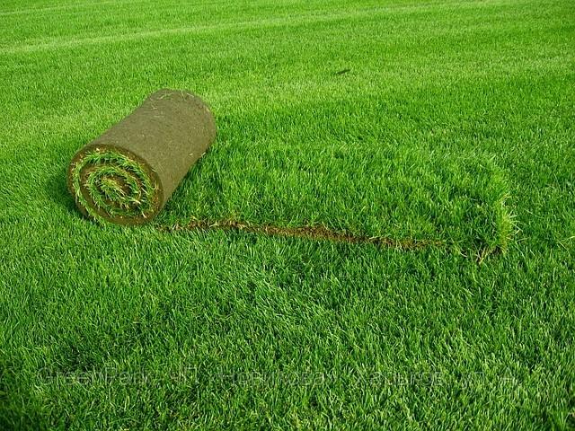 Выбор рулонного газона