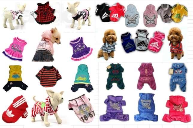 Выбор одежды для собак