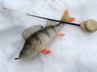 Зимняя рыбалка: Советы и рекомендации