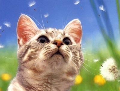 Как правильно подойти к выбору котенка