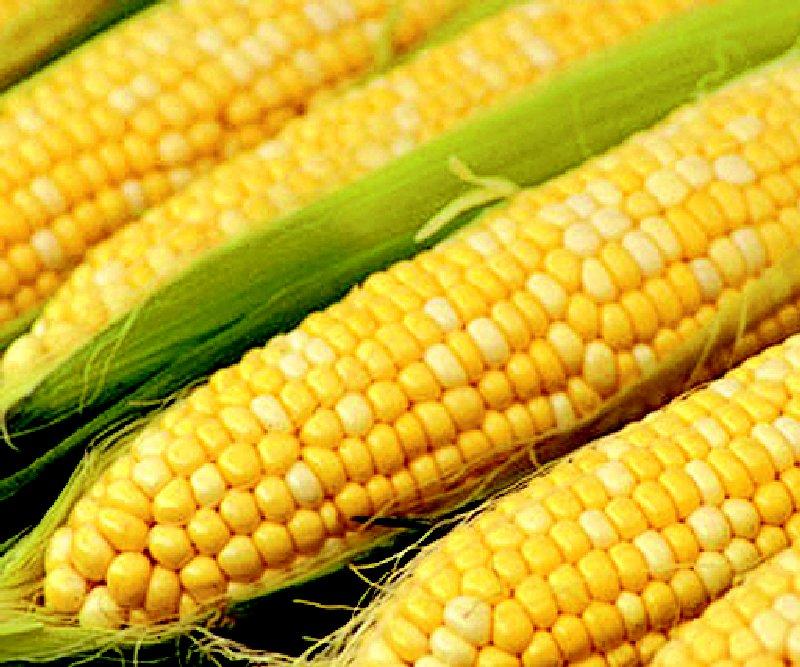 Как выращивать кукурузу на даче или огороде