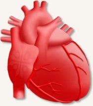 Лечение сердца в Германии – советы и рекомендации