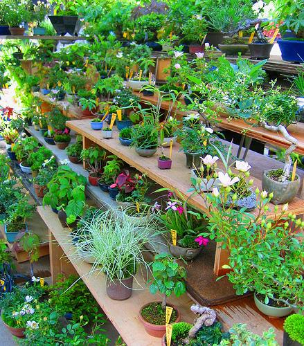 Создаем хорошие условия для комнатных растений
