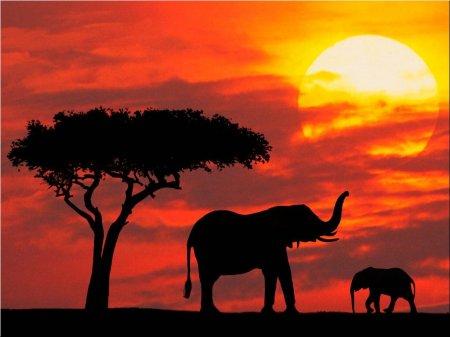 Советы и рекомендации по поездке в Кению