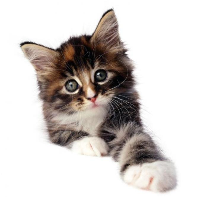 Выбор котёнка в приюте