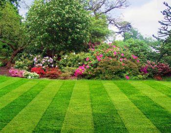 Как правильно сажать рулонный газон