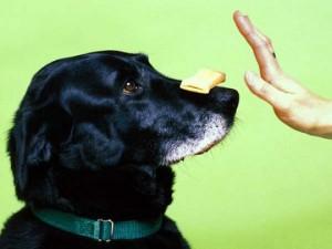 Советы начинающим владельцам собак