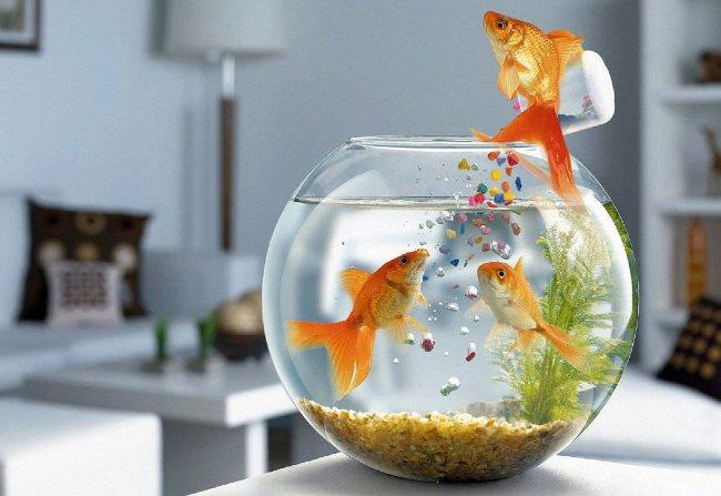 Советы по кормлению аквариумных рыб