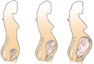 развитие беременности по неделям