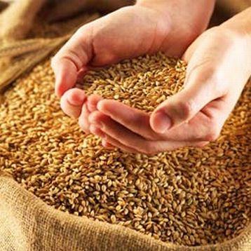 Как измерить влажность зерна