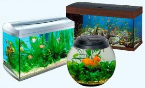 выбрать аквариум