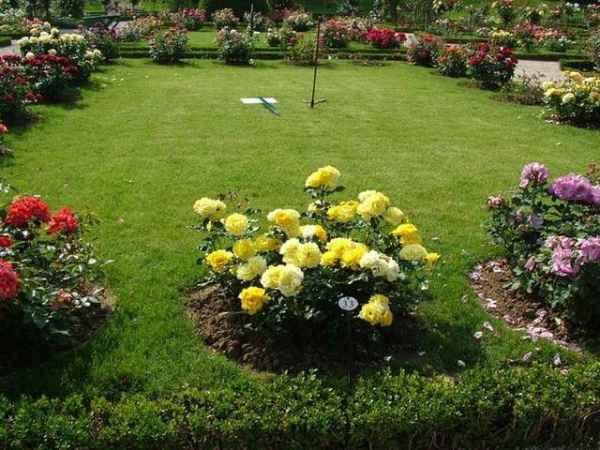 Советы по выращиванию цветов в саду