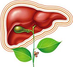 Советы по лечению цирроза печени