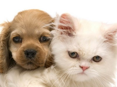 Полезные советы владельцам домашних животных
