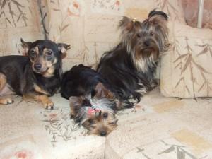 Советы по стрижке и грумингу собак