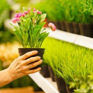 Советы по выбору комнатных цветов