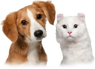 Советы посетителям ветеринарных клиник
