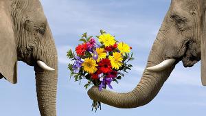 цветы подарить девушке