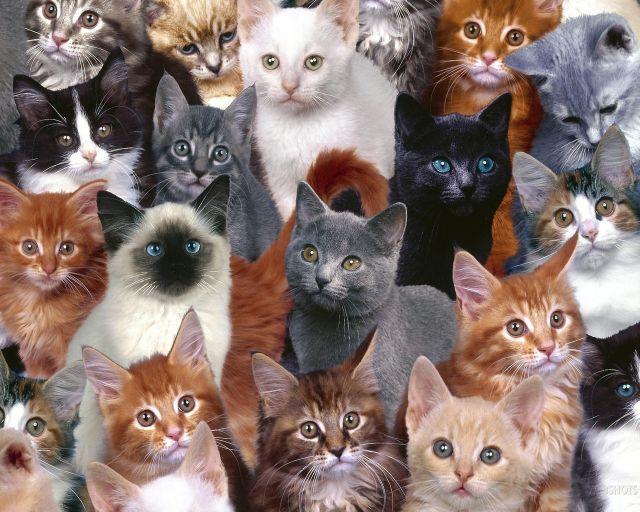 Какую породу кошек выбрать для ребенка