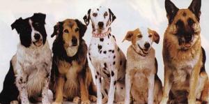 Советы по выбору породы собаки