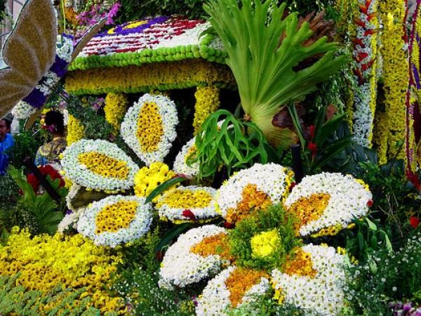 Советы флористам-любителям