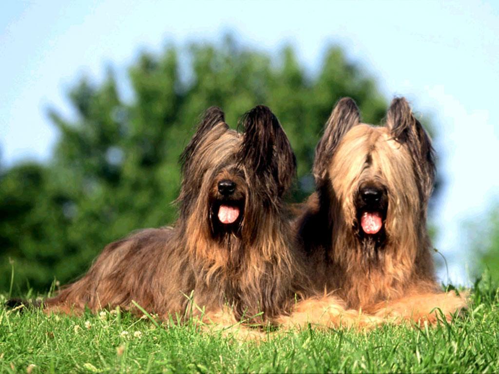 Какую породу собаки избрать
