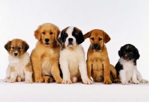 выбор породы собаки