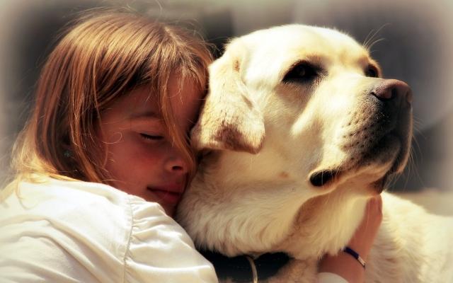 Советы владельцам собак