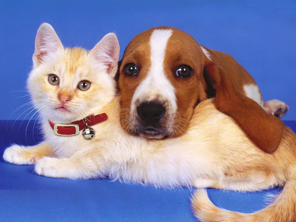 Советы по содержанию собак и кошек