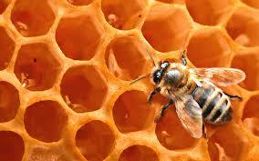 Чем полезны пчелиные медовые соты