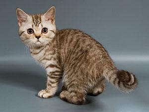 Чем кормить котят с первого по третий месяц жизни