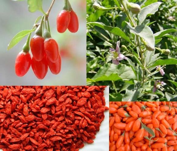Как принимать ягоды годжи