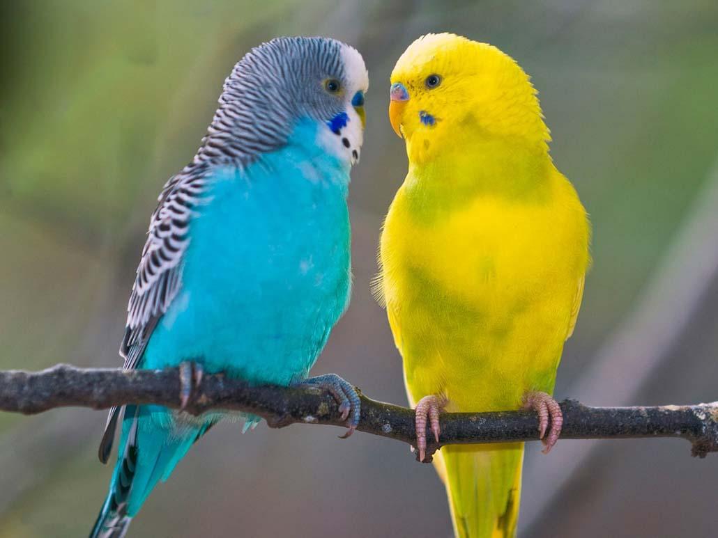 Советы по содержанию попугаев