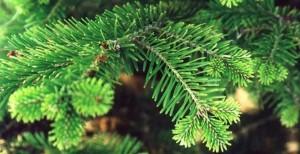 осыпание елки