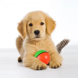 Полезные советы для владельцев собак