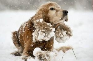 Уход за собакой в зимний период