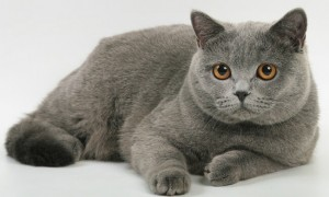 Рост и развитие кошек