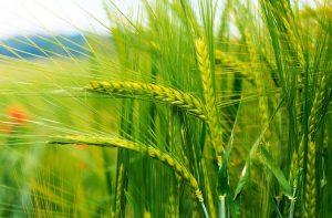 Способы прогрессивного растениеводства