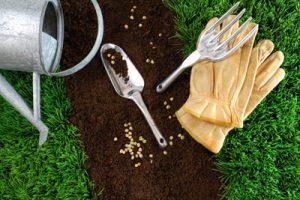 Как правильно посадить газон